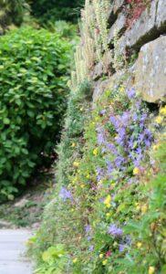 Blumenwand_Irland