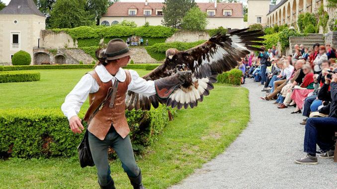 Schloss-Rosenburg_Greifvogelshow