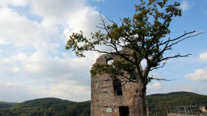 Burg-Neideck_2012_Turm-mit-Baum