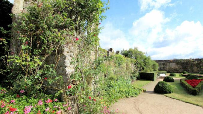 Chateau-de-Montreuil-Bellay_5740_Mauer-mit-Blumen