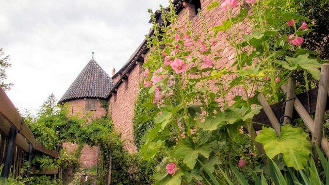 Hohkoenigsburg_Mittelalterlicher-Garten_c-BenoitKoenig