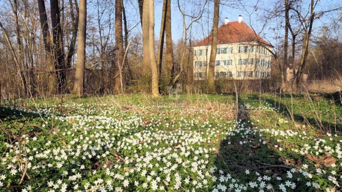 Sisi-Schloss-Aichach_Buschwindroeschen-im-Park_c-ErichEchter