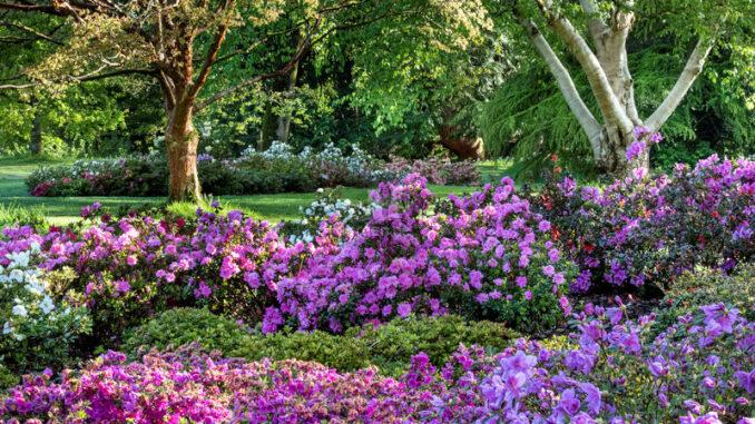 Blarney-Castle_Garten-in-Bluete_800
