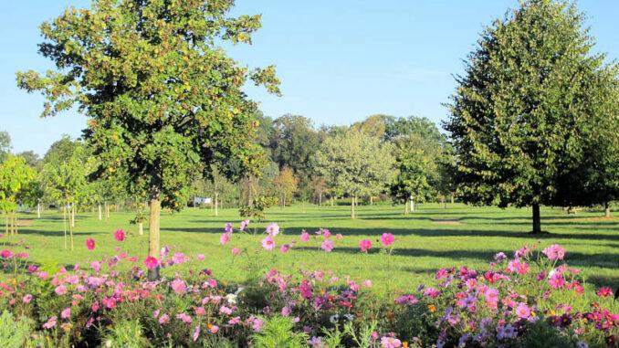 Schloss-Erbhof_Baumpark_c-Schloss-Erbhof