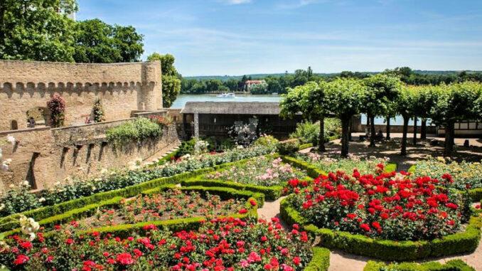 Burg-Eltville-am-Rhein_Amtsgarten-mit-Rheinblick_c-Bildarchiv-Magistrat-der-Stadt-Eltville-am-Rhein_800