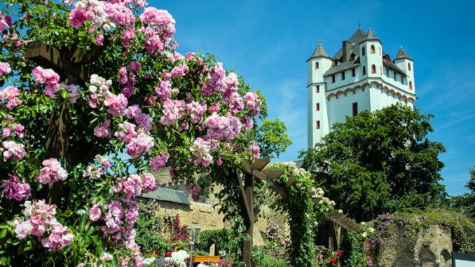 Burg-Eltville-am-Rhein_Burg-und-Rosengarten_c-Bildarchiv-Magistrat-der-Stadt-Eltville-am-Rhein_800