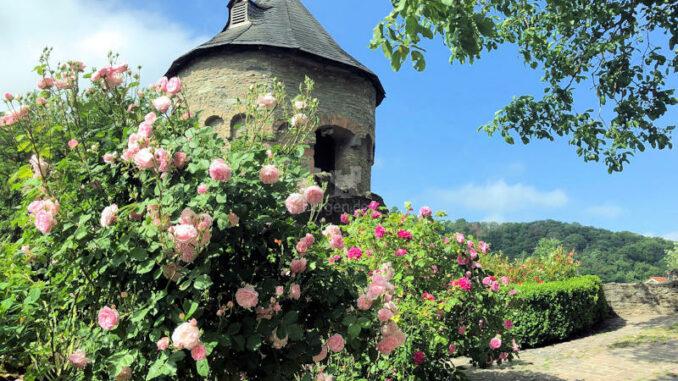 Stadt-und-Burgmuseum-Eppstein_Burg-versteckt-hinter-Rosen-Sonnenschein_c-Stadt-und-Burgmuseum-Eppstein_800