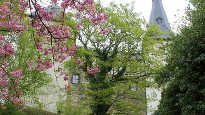 Burg-Mylau_Burg-mit-Kirschblueten_c-Museum-Burg-Mylau-Sina-Lorbeer-Klausnitz_800