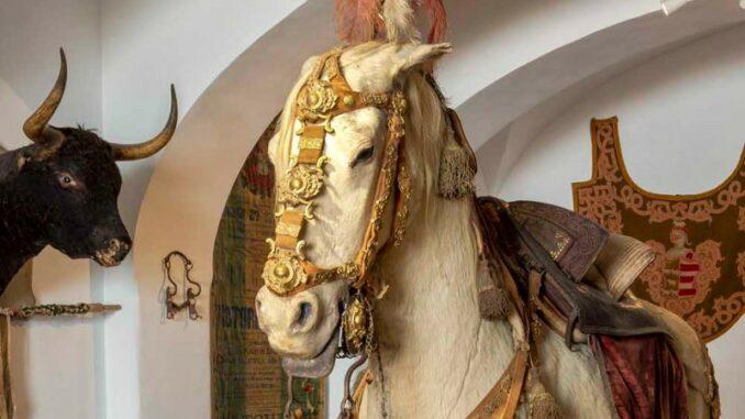 Quinta-da-Esperanca_Ausstellung-geschmuecktes-Pferd_Antonio-Cunha_800