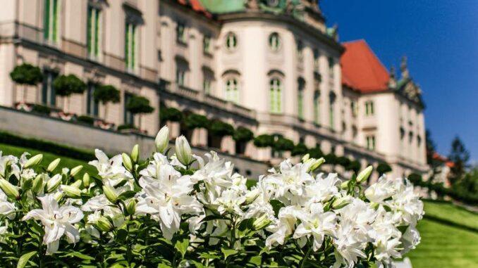 Zamek-Krolewski-w-Warszawie_Bluehender-Schlossgarten_c-Zamek-Krolewski-w-Warszawie_800